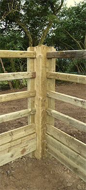 equine arena fence